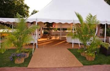 Havana-Palm-Tree-Prop-Rentals