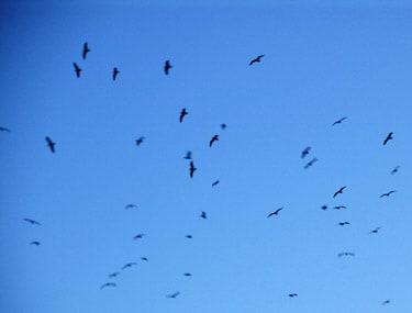 Excellent_birds