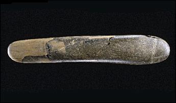 Prehistoricphallus