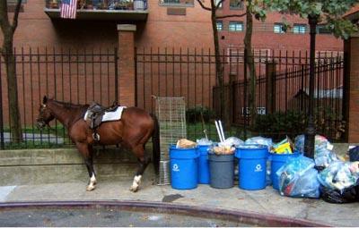 2005_09_horse