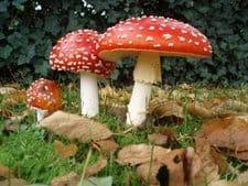 Magicshrooms