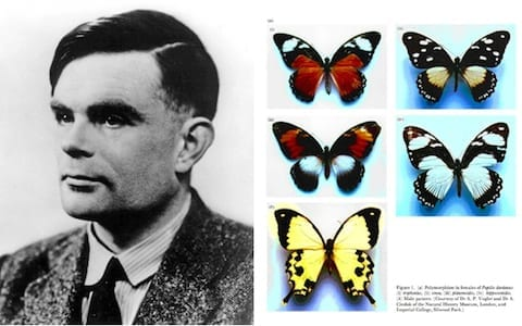 Alan Turing Morphogenesis
