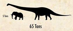 Dreadnaughtus
