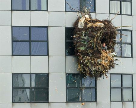nesting dutch artist
