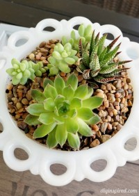 13 Ideas for Decorating with Succulents - Town & Country ...