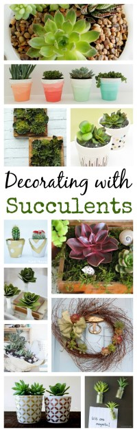 13 Ideas for Decorating with Succulents