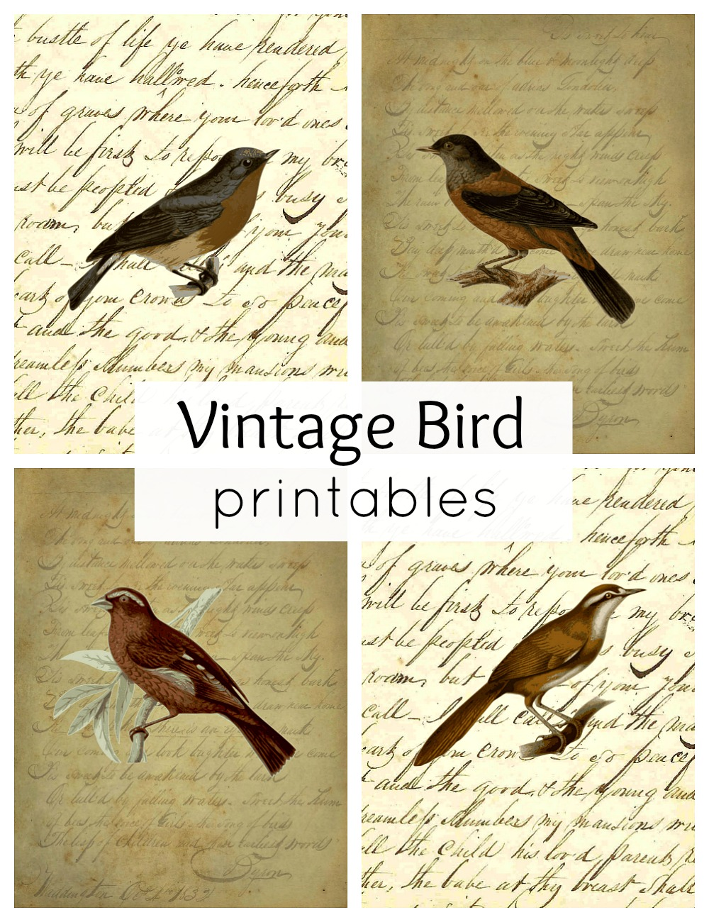 vintage bird printables for