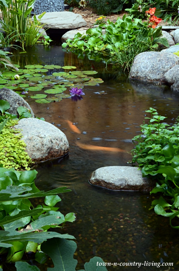 my koi pond in the backyard town