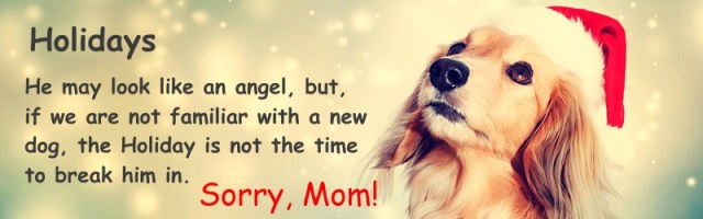 Holiday Pet Rule