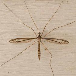 mosquito, mosquitos, mosquitoes, town and country, town and country pest solutions, pest, pests, rochester, syracuse, buffalo, rochester ny, syracuse ny, buffalo ny, new york, western ny, rochester exterminators, syracuse exterminators, buffalo exterminators, bed bugs, fabry, matt fabry, extermination, hire the pros, friendly, trustworthy
