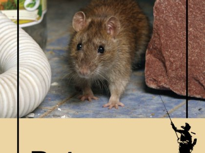 How Do Hurricanes In New York Affect The State's Rat Population?