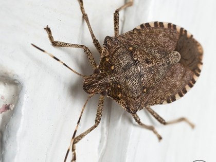 Common Bugs In Upstate New York Homes