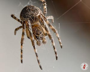 How Are Social Spiders Different From Social Insects?