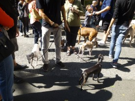 A few of the pooches in attendance