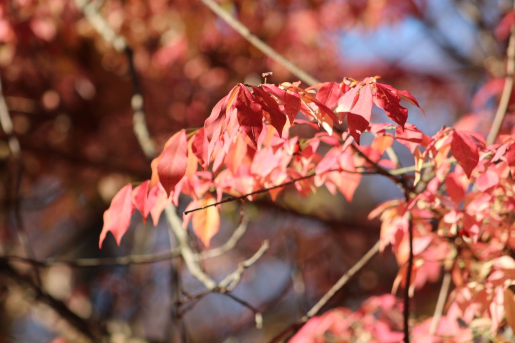 red leaves in the fall in michiana shores