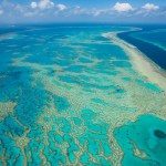 The Great Barrier Reef Coral in Australia