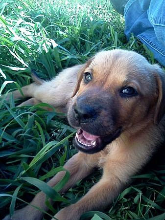 East Tx Pets Craigslist : craigslist, Cutest, Craigslist, Lufkin,, Nacogdoches, Texas
