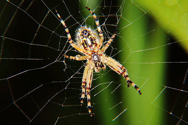 also spiders in iowa to watch out for rh