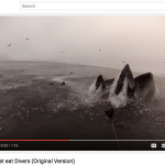 Watch This Man Almost Get Swallowed by a Hungry Whale