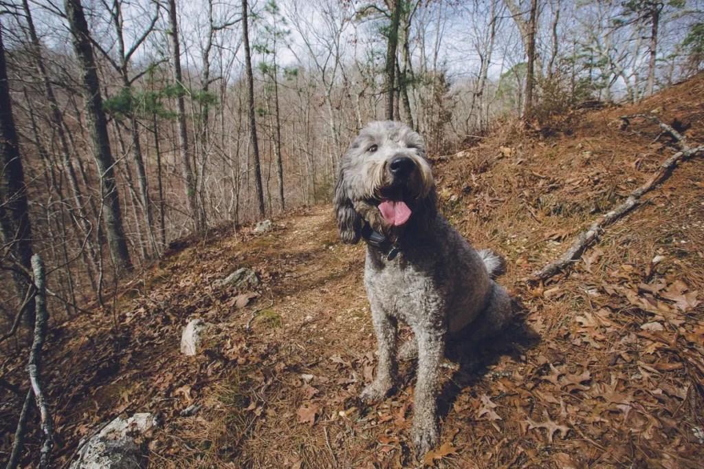 Meet Annie, she was a good hiking companion.