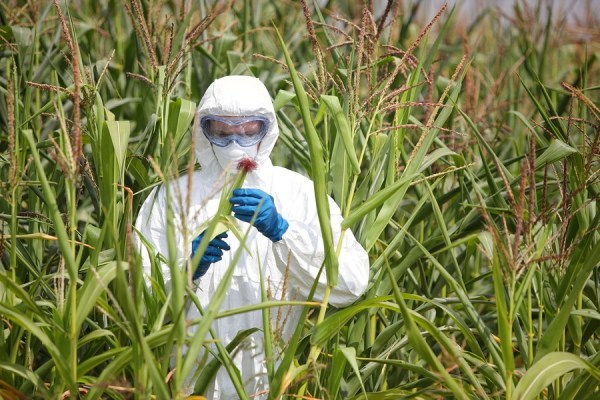 GMO,professional in uniform goggles,mask and gloves examining co