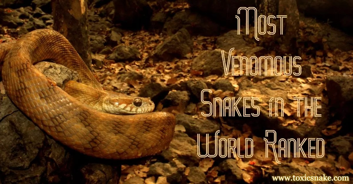 Most Venomous Snakes in the World Ranked