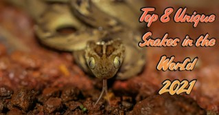 Top 8 Unique Snakes in the World 2021
