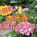 本光寺の紫陽花まつり2018の見頃や開花状況を紹介!【幸田町あじさい寺】