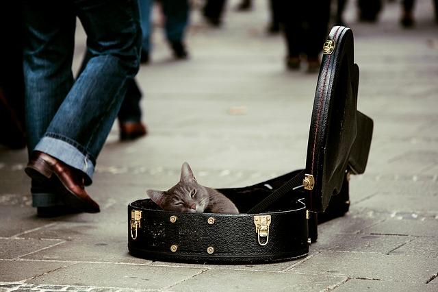 猫にギター