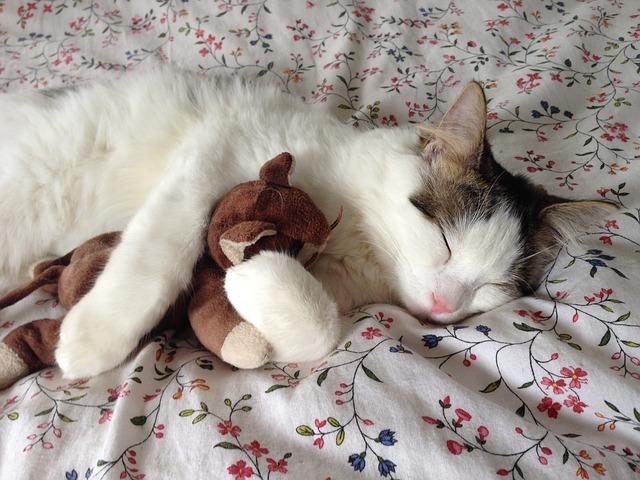 おやすみ猫ちゃん