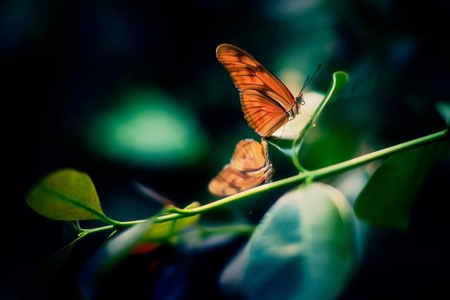 羽ばたく蝶
