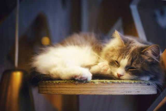 sleeping cat8