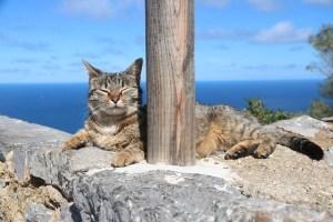 海で居眠り猫ちゃん
