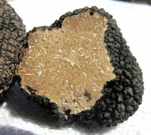 truffle trufa tartufo subterranean fungus