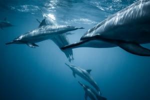 delfín delfines delfino dolphin evolution evolución evoluzione preshistoria prehistory preistoria cetáceos cetacei cetacean