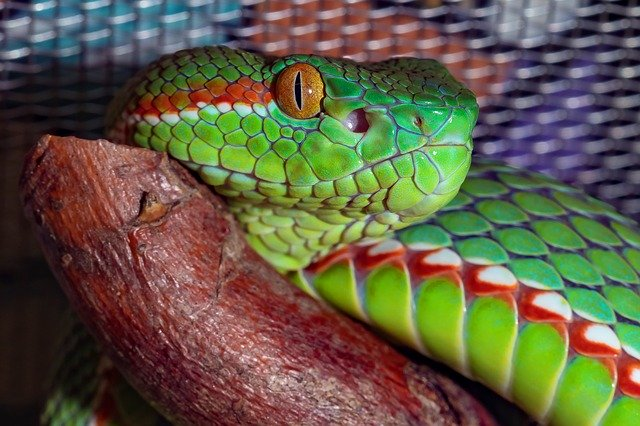 WHY YOU SHOULDN'T HAVE A SNAKE AS A PET