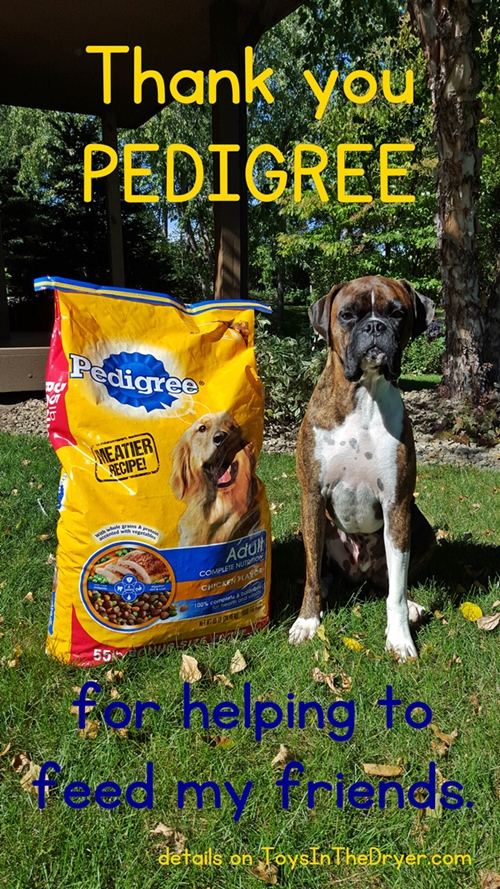 Bentley's Story #PedigreeGives #shop