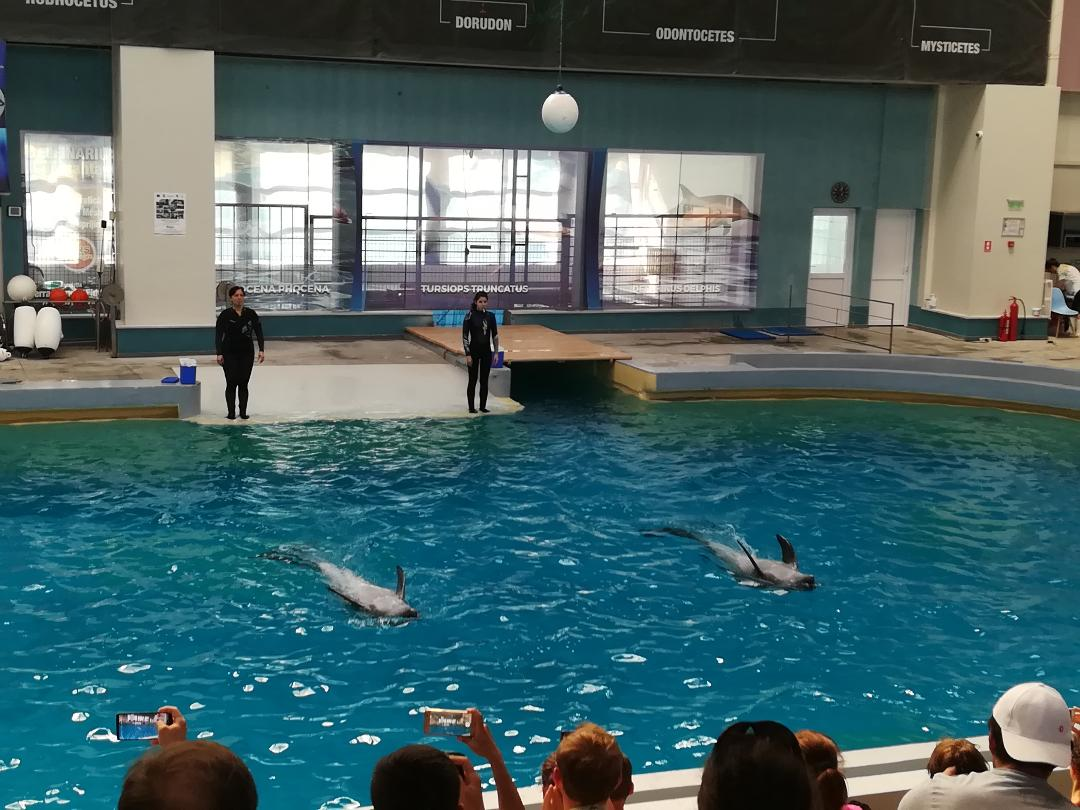delfini 1