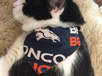 Denver-bronco-fan