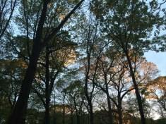 Evening at Hempstead Lake