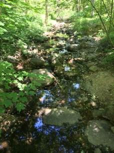 Sun-dappled streams