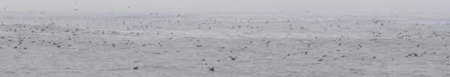 Sooty seas