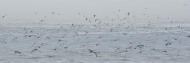 The flock takes flight