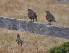 High-quaility fencing