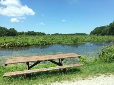 Picturesque picnic