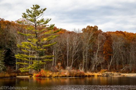 Fall Pond Colors - Click To Enlarge