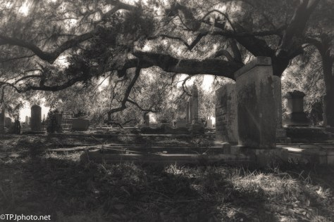 Old Cemetery B&W - Click To Enlarge