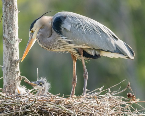 Heron, New Arrivals - Click To Enlarge