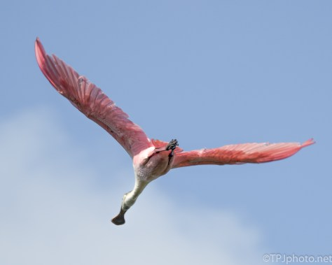 Several Big, Colorful, Flying By - Click To Enlarge