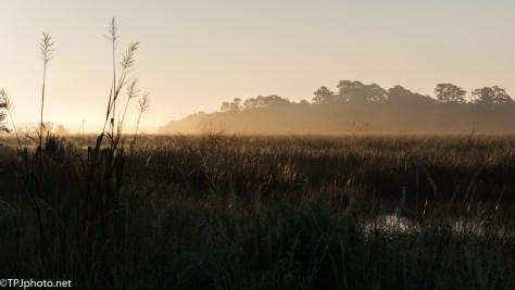 Marsh Fog - click to enlarge